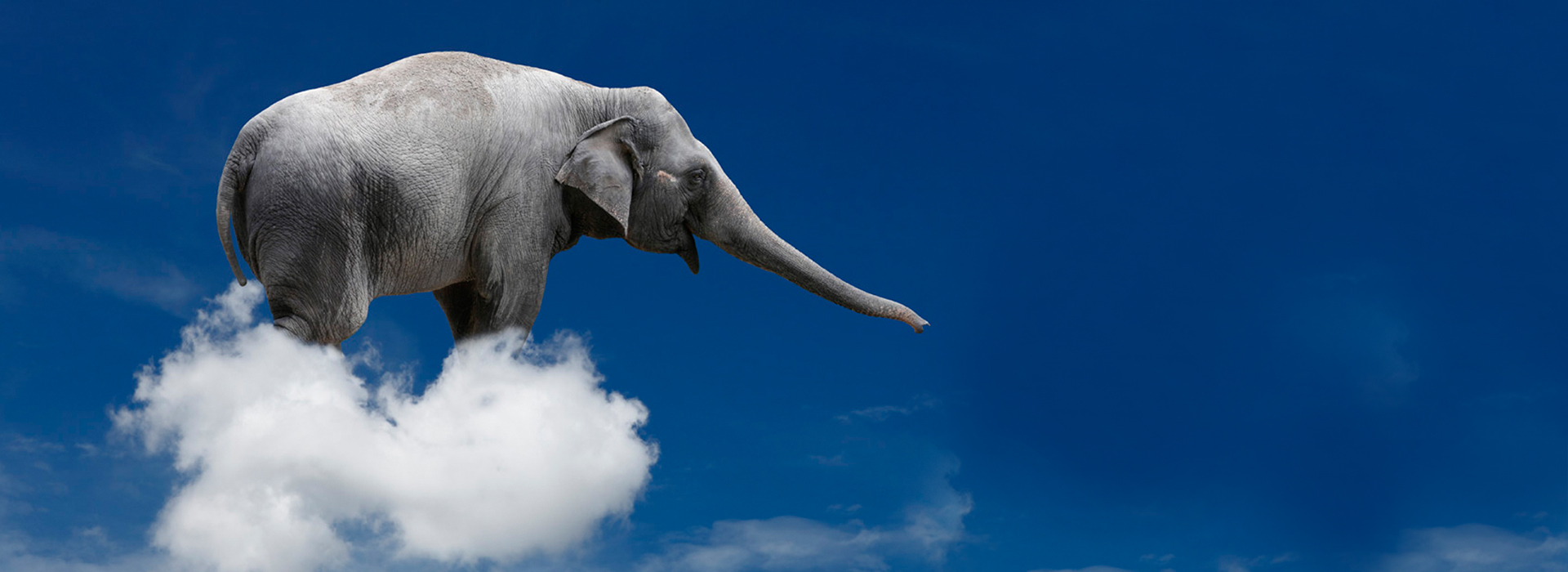 slide-elefante
